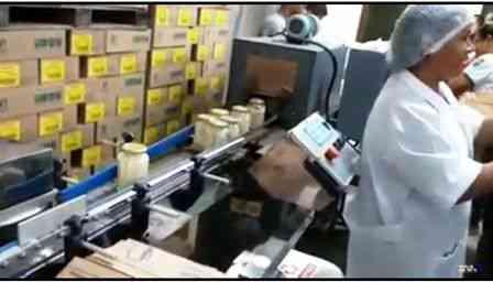 Vídeo: Palmito da região de Una começa a ser processado pela Cooperativa COOPALM