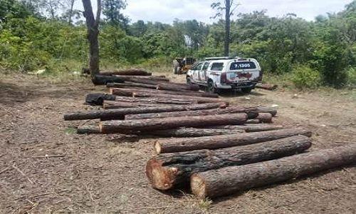 Camaçari: Policiais da Cipe prende grupo de 11 pessoas por crime ambiental