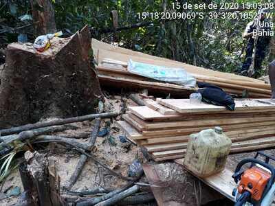 Desmatamento ilegal em Una: Após denúncia, Trator e motosserras foram apreendidos