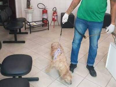 Crueldade: Cão tem órgão genital cortado em salvador; Polícia busca identificar o autor