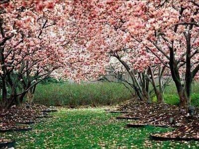 Início da primavera: o que é o equinócio, que marca o começo da estação tão especial